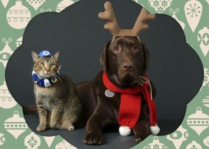 cat_holiday_framed